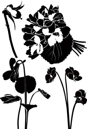 branch to grow up: violetas ramo de flores, d�a festivo, madera Pensamientos Vectores