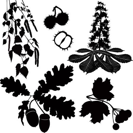 the branches of an oak,a birch,a guelder-rose,chestnut Vector
