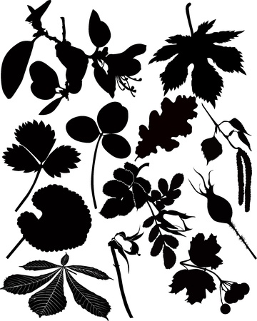leaves, branches, flowers, trees, grass isolated on white background Stock Vector - 16297880