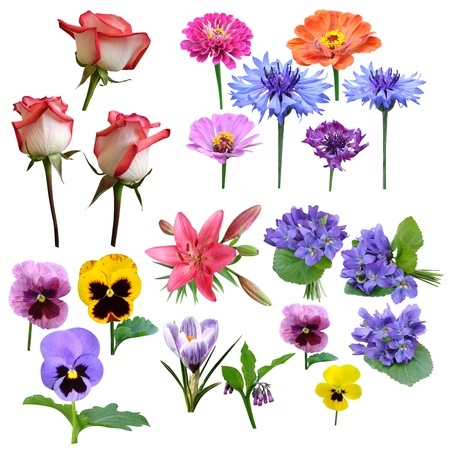 flowers collection of roses violet carnation Lily majors Stock Photo - 16394498