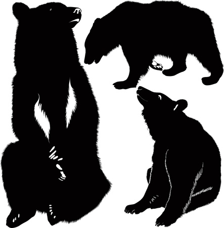 Bears white brown animals Vector
