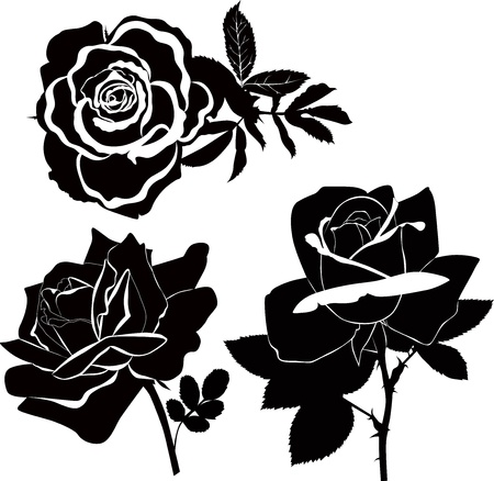 pink and black: Roses flowers it is isolated a holiday  Illustration