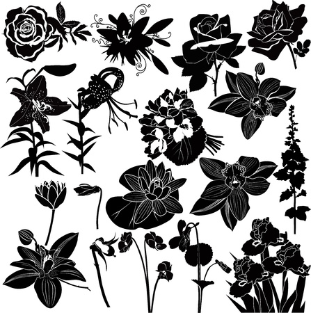 collection of flowers isolated on white background Illustration