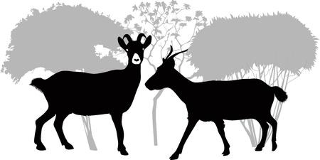 grazed: Goat kids animals isolated white background vector  Illustration