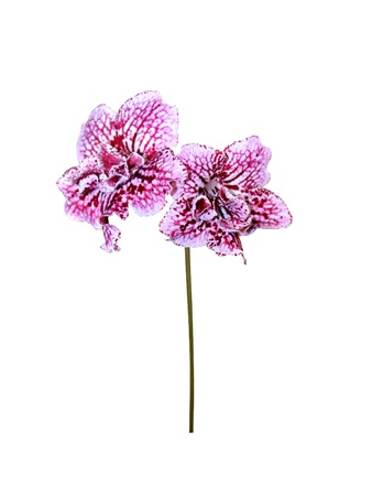 Orchids flowers it is isolated a holiday Stock Photo - 16509604