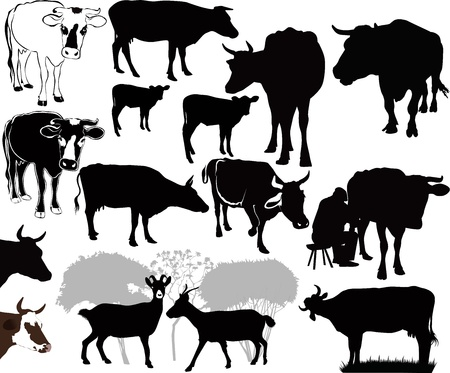 grazed: Goat Cow animals calf isolated white background vector silhouette Illustration
