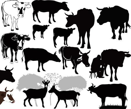 Zwierzęta krowa koza cielę pojedyncze białe tło sylwetka wektor