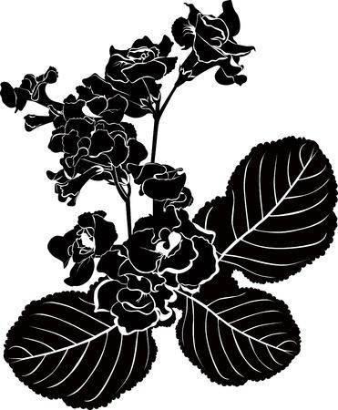 branch to grow up: Orqu�deas flores se a�sla