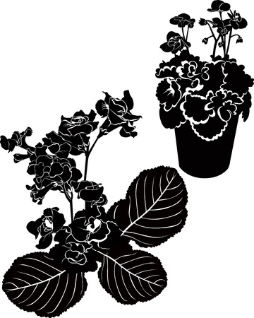Orchids violets  flowers it is isolated Vector