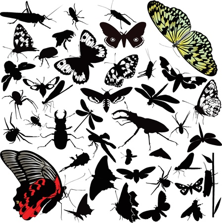 insects animals butterfly Stock Vector - 16839045