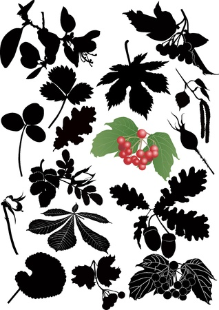 dog rose: leaves, branches, flowers, trees, grass isolated on white background
