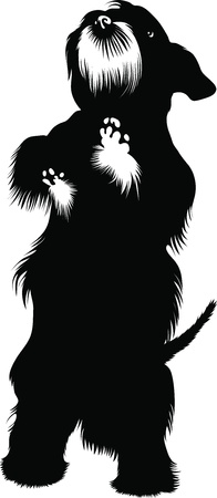 dog Scotch-Terje animal isolated Vector
