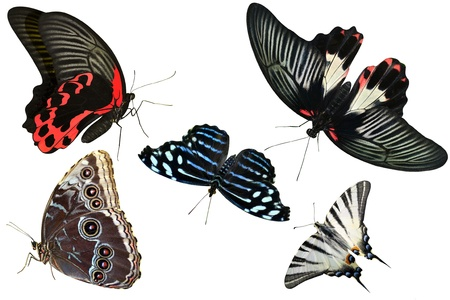 exotic butterflies: butterflies are insects collection of isolated on white background