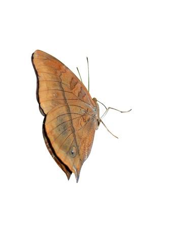 beautiful insect photo