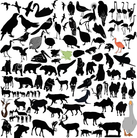 birds and the animals collection of isolated on white background Vector
