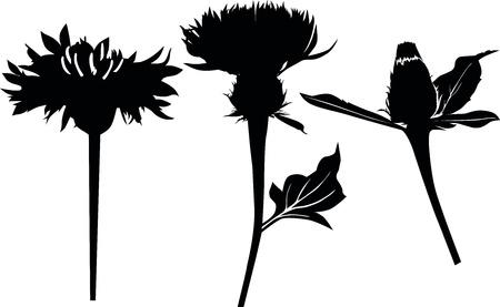 ostrożeń: Thistle roÅ›lin mleko kwiat samodzielnie na biaÅ'ym tle Ilustracja