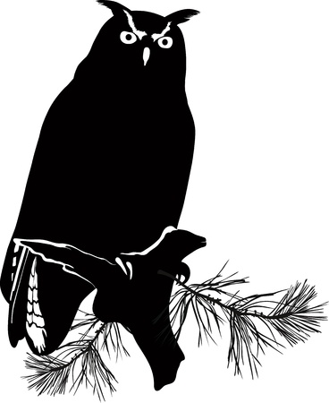 bird owl isolated on white background Stock Vector - 17514355