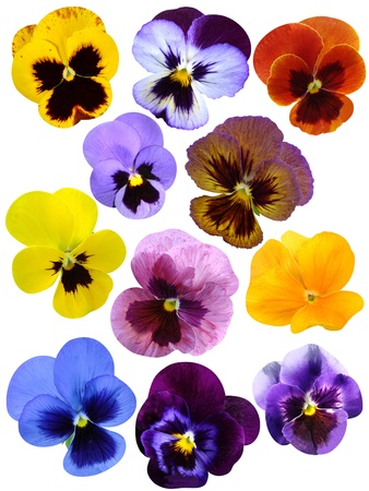 violet  flower collection Stock Photo