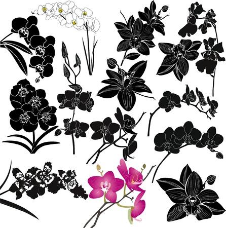 branch to grow up: Flores de orqu�deas aislado