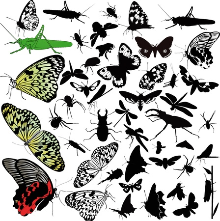 bumble bee: insects animals butterfly Illustration