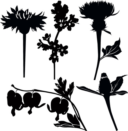 Wildflowers drugs Vector