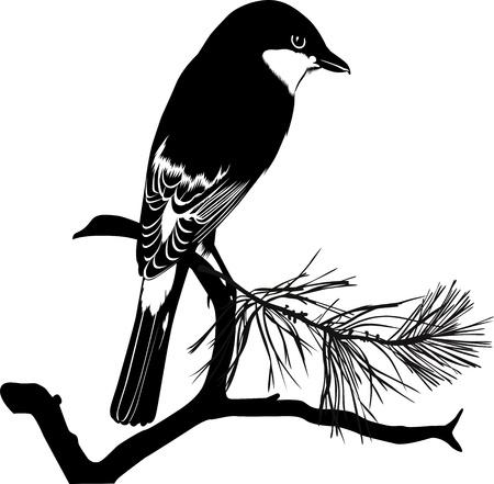 Small bird on a tree branch Stock Vector - 17848756