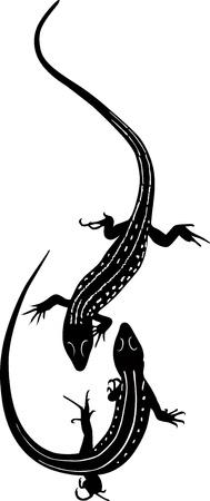 blooded: animal lizard   Illustration