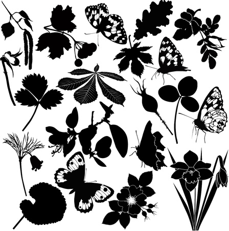 collection butterfly flower Vector