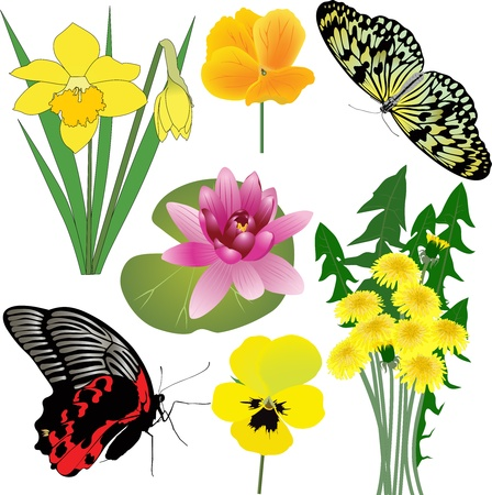 collection of flowers and butterflies Vector