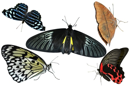 butterflies are insects collection of isolated on white background photo