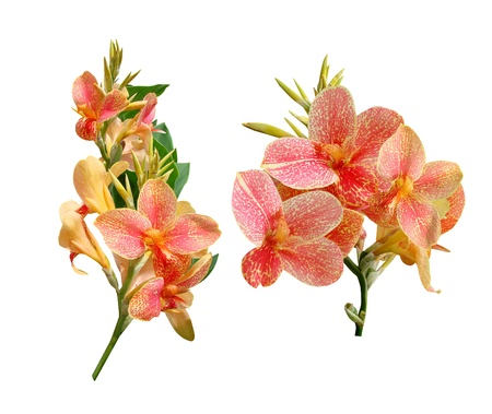 Cannes flowers it is isolated a holiday Stock Photo - 18081249