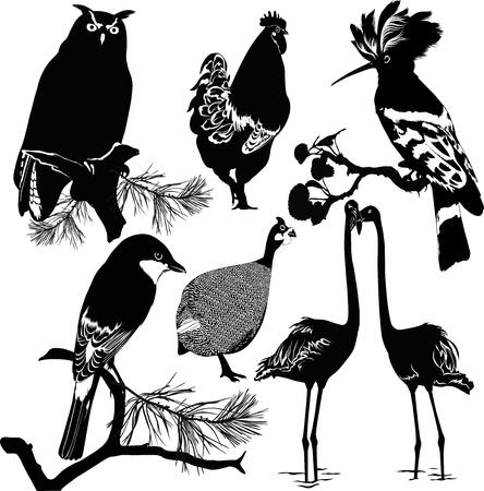 black beak: Birds isolated on white background