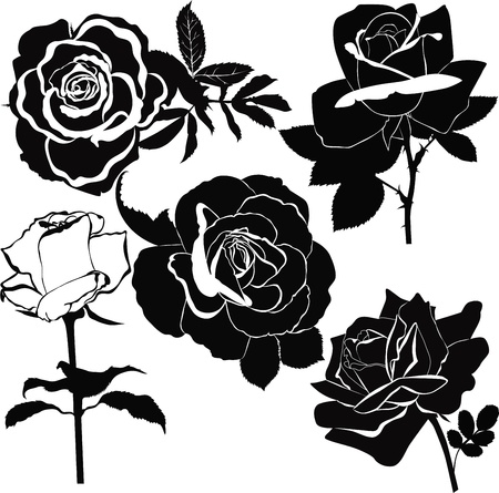 rose bush: Roses flowers it is isolated a holiday  Illustration