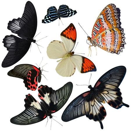 mariposas volando: colección de insectos de las mariposas aisladas sobre fondo blanco Foto de archivo