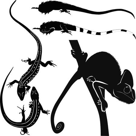 chameleon lizard: camaleonte, lucertola, iguana animali isolato su sfondo bianco Vettoriali