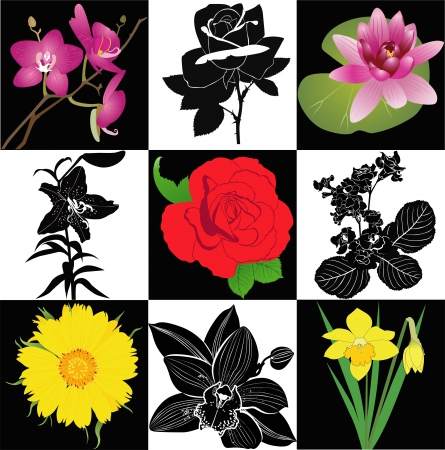 collection of flowers roses lilies orchid narcissus sunflower vector isolated Vector