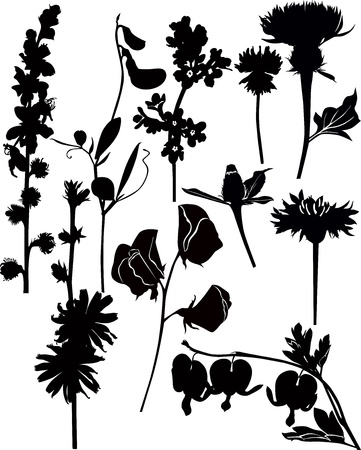 Wildflowers collection vector isolated on white background Vector