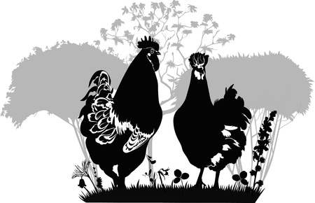 Rooster a hen a chicken of a bird it is isolated  a farm Vector