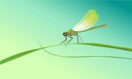 dragonfly sitting on a blade of grass against a blue sky Vector