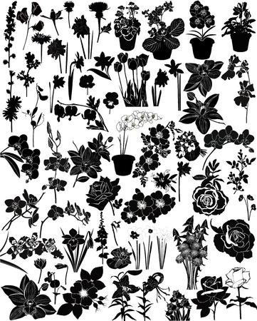 lily flower: collectie van bloemen op een witte achtergrond Stock Illustratie