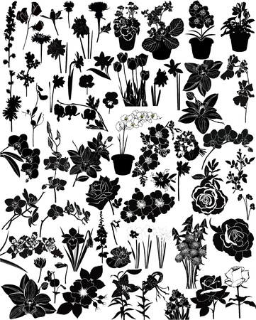 orchids: collection of flowers isolated on white background Illustration