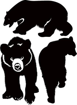 wildlife: Bears white brown animals