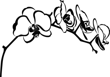 orchid flower branch vector isolated Vettoriali