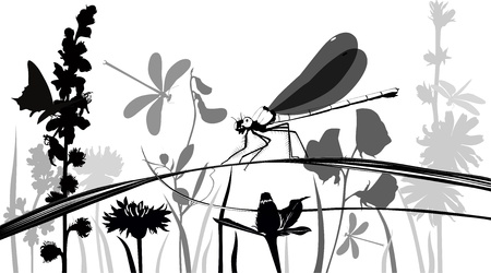 Dragonfly, butterflies, insects in the meadow with flowers Vector