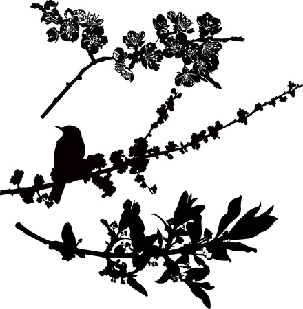 cherry blossom tree: tree branches in flower bird starling