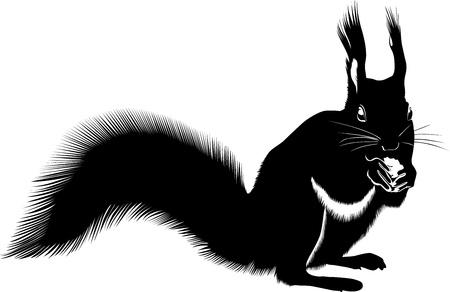 black squirrel: animal squirrel
