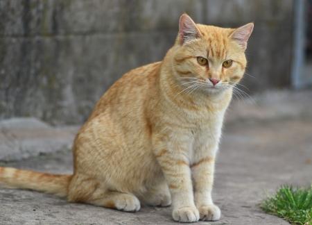 cat walk: cute cat cartoon and redhead Stock Photo