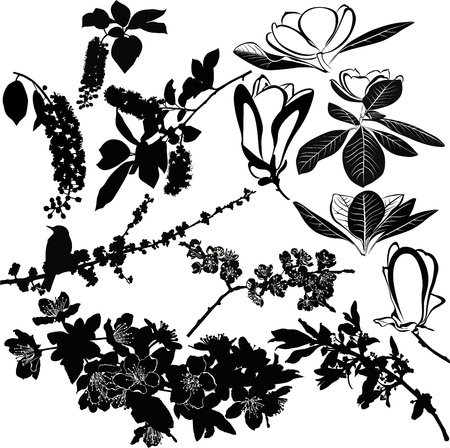 magnolia, cherry, cherry and apple tree twigs isolated on white background Vector