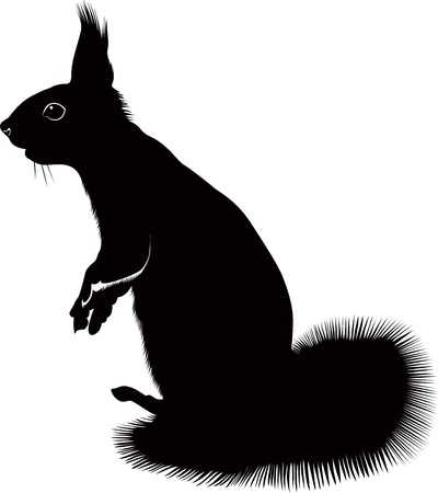 delineate: animal squirrel