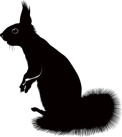 animal squirrel Stock Vector - 20004895